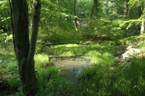 A pretty vernal pool was one of the features I loved about our new house.