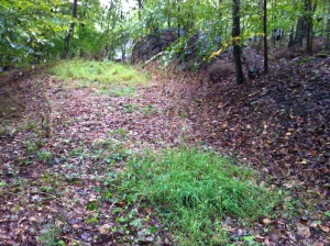The site of our future forest garden, as seen from the back facing the house.