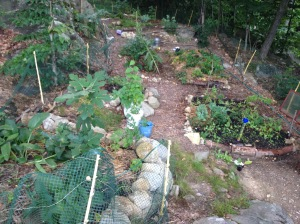 my forest garden in August 2015